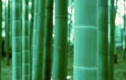 绿色竹林 1 20 绿色竹林 花卉壁纸