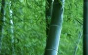 绿色竹林 1 19 绿色竹林 花卉壁纸