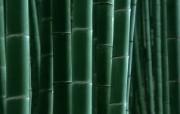 绿色竹林 1 18 绿色竹林 花卉壁纸