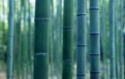 绿色竹林 1 15 绿色竹林 花卉壁纸