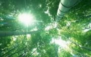 绿色竹林 1 13 绿色竹林 花卉壁纸