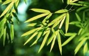 绿色竹林 1 6 绿色竹林 花卉壁纸