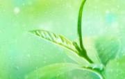 绿叶合成 1 16 绿叶合成 花卉壁纸