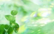 绿叶合成 1 15 绿叶合成 花卉壁纸