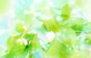绿叶合成 1 13 绿叶合成 花卉壁纸