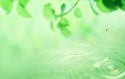 绿叶合成 1 9 绿叶合成 花卉壁纸