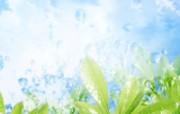 绿叶合成 1 8 绿叶合成 花卉壁纸