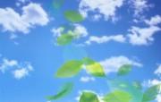 绿叶合成 1 6 绿叶合成 花卉壁纸