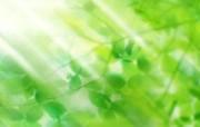 绿叶合成 1 4 绿叶合成 花卉壁纸