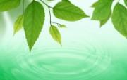 绿叶合成 1 1 绿叶合成 花卉壁纸