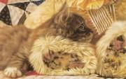 触动心灵的动物绘画 Lesley Harrison 手绘动物作品集 Lesley Harrison 手绘插画 Precious Friends桌面壁纸 触动心灵的动物绘画Lesley Harrison 手绘动物作品集 绘画壁纸
