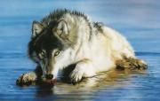 触动心灵的动物绘画 Lesley Harrison 手绘动物作品集 Lesley Harrison 手绘插画 Popsicle桌面壁纸 触动心灵的动物绘画Lesley Harrison 手绘动物作品集 绘画壁纸