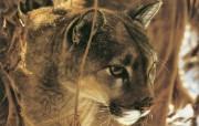 触动心灵的动物绘画 Lesley Harrison 手绘动物作品集 Lesley Harrison 手绘插画 Icy Whiskers桌面壁纸 触动心灵的动物绘画Lesley Harrison 手绘动物作品集 绘画壁纸