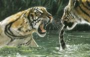 触动心灵的动物绘画 Lesley Harrison 手绘动物作品集 Lesley Harrison 手绘插画 A Tiger By The Tail桌面壁纸 触动心灵的动物绘画Lesley Harrison 手绘动物作品集 绘画壁纸
