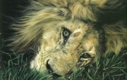 触动心灵的动物绘画 Lesley Harrison 手绘动物作品集 Lesley Harrison 手绘插画 Many Moons桌面壁纸 触动心灵的动物绘画Lesley Harrison 手绘动物作品集 绘画壁纸