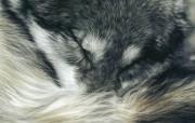 触动心灵的动物绘画 Lesley Harrison 手绘动物作品集 Lesley Harrison 手绘插画 A Quiet Moment桌面壁纸 触动心灵的动物绘画Lesley Harrison 手绘动物作品集 绘画壁纸