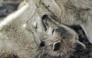 触动心灵的动物绘画 Lesley Harrison 手绘动物作品集 Lesley Harrison 手绘插画 A Tender Moment桌面壁纸 触动心灵的动物绘画Lesley Harrison 手绘动物作品集 绘画壁纸