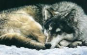 触动心灵的动物绘画 Lesley Harrison 手绘动物作品集 Lesley Harrison 手绘插画 And The Wolf Dreams桌面壁纸 触动心灵的动物绘画Lesley Harrison 手绘动物作品集 绘画壁纸