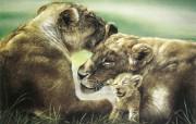 触动心灵的动物绘画 Lesley Harrison 手绘动物作品集 Lesley Harrison 手绘插画 African Lioness With Cub桌面壁纸 触动心灵的动物绘画Lesley Harrison 手绘动物作品集 绘画壁纸
