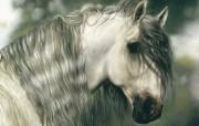 触动心灵的动物绘画 Lesley Harrison 手绘动物作品集 Lesley Harrison 手绘插画 Excalibur桌面壁纸 触动心灵的动物绘画Lesley Harrison 手绘动物作品集 绘画壁纸