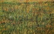 梵高 印象画派 作品宽屏壁纸 壁纸19 梵高(印象画派)作品 绘画壁纸