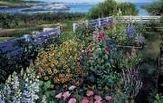 花团锦簇的花园 Susan Rios 油画作品 Susan Rios 绘画浪漫花园与温馨的家 绘画壁纸