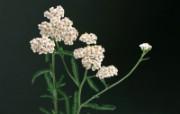 草本生活元素摄影壁纸 草本花卉 健康草本生活主题壁纸 泰迪熊珍藏绘本第一辑 绘画壁纸
