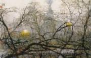 圣彼得堡之晨 异国风光山水画 异国风光刘懋善山水画壁纸 绘画壁纸