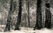 森林一角 美国 异国风光山水画 异国风光刘懋善山水画壁纸 绘画壁纸