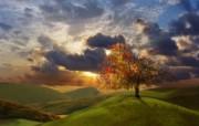 早晨的阳光神奇油画壁纸 壁纸16 早晨的阳光神奇油画壁 绘画壁纸