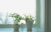 高精度室内盆栽摆设 建筑壁纸