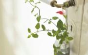 高精度室内盆栽摆设 壁纸11 高精度室内盆栽摆设 建筑壁纸