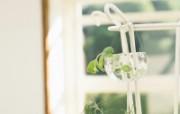 高精度室内盆栽摆设 壁纸15 高精度室内盆栽摆设 建筑壁纸