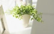 高精度室内盆栽摆设 壁纸23 高精度室内盆栽摆设 建筑壁纸