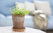 高精度室内盆栽摆设 壁纸24 高精度室内盆栽摆设 建筑壁纸