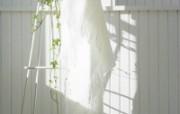 高精度室内盆栽摆设 壁纸30 高精度室内盆栽摆设 建筑壁纸