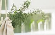 高精度室内盆栽摆设 壁纸31 高精度室内盆栽摆设 建筑壁纸