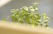 室内绿色摆设壁纸2 宽屏 1600 1200 壁纸5 室内绿色摆设壁纸2( 建筑壁纸