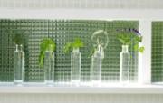 室内绿色摆设壁纸2 宽屏 1600 1200 壁纸8 室内绿色摆设壁纸2( 建筑壁纸