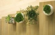 室内绿色摆设壁纸2 宽屏 1600 1200 壁纸22 室内绿色摆设壁纸2( 建筑壁纸