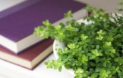 室内绿色摆设壁纸2 宽屏 1600 1200 壁纸26 室内绿色摆设壁纸2( 建筑壁纸