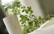 室内绿色摆设壁纸2 宽屏 1600 1200 壁纸27 室内绿色摆设壁纸2( 建筑壁纸