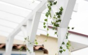 室内绿色摆设壁纸2 宽屏 1600 1200 壁纸30 室内绿色摆设壁纸2( 建筑壁纸