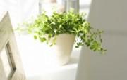 室内绿色摆设壁纸 宽屏 1600 1200 壁纸6 室内绿色摆设壁纸(宽 建筑壁纸
