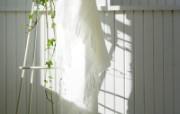 室内绿色摆设壁纸 宽屏 1600 1200 壁纸10 室内绿色摆设壁纸(宽 建筑壁纸