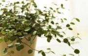 室内绿色摆设壁纸 宽屏 1600 1200 壁纸19 室内绿色摆设壁纸(宽 建筑壁纸