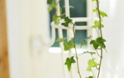 室内绿色摆设壁纸 宽屏 1600 1200 壁纸29 室内绿色摆设壁纸(宽 建筑壁纸