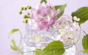 超大花卉礼品 4 19 超大花卉礼品 节日壁纸