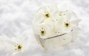 超大花卉礼品 4 17 超大花卉礼品 节日壁纸