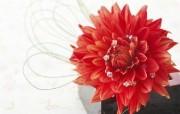 超大花卉礼品 4 16 超大花卉礼品 节日壁纸